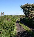 Bridleway to Ty'-y-lon - geograph.org.uk - 1357137.jpg