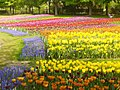 Britzer Garten - Tulipan 2013 - geo.hlipp.de - 36174.jpg