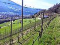 Brixen, Province of Bolzano - South Tyrol, Italy - panoramio (27).jpg