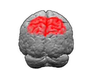 Brodmann area 7 - Image of brain with Brodmann area 7 shown in red