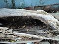 Broken wood.JPG