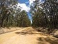 Brooman NSW 2538, Australia - panoramio (135).jpg