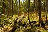 Brule River Boreal Forest.jpg