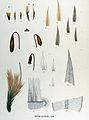 Bryum alpinum — Flora Batava — Volume v17.jpg