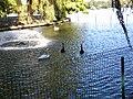 Bucuresti, Romania, Parcul Herastrau (Imagine de pe lacul Herastrau)(Lacul Lebedelor, 3); B-II-a-A-18802.JPG