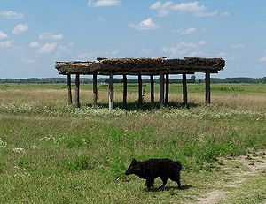 Shelter (building) - Bugac puszta, Hungary, with animal shelter and mudi