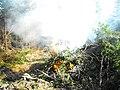 Burning boughs - panoramio.jpg
