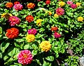 Butchart Gardens, Victoria, British Columbia, Canada (29110680352).jpg
