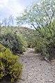 Butcher Jones Trail to Pinter's Point Loop, Tonto National Park, Saguaro Lake, Ft. McDowell, AZ - panoramio (170).jpg