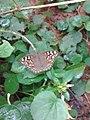 Butterflyimage.jpg