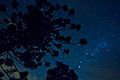 Céu de Ibitipoca a noite - Minas Gerais.jpg
