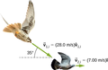 CNX UPhysics 09 05 hawk dove img.png