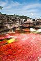 Caño Cristales - La Macarena, Meta, Colombia (Sector conocido como Los Ochos).jpg