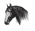 Cabeza de caballo.png
