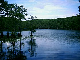 Caddo Lake- Cypress.jpg