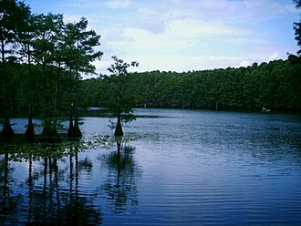Geography of Texas - Caddo Lake
