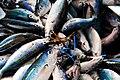Caesio caerulaurea (Port Moresby Fish Market).jpg