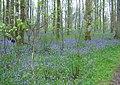 Cally Woods, near Gatehouse of Fleet - geograph.org.uk - 1373241.jpg