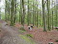 Cally Woods - geograph.org.uk - 1373186.jpg