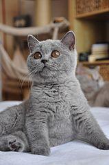 otevřená široká černá kočička velké webové stránky