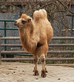 Camel picture.jpg