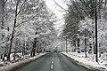 Cannock Chase In The Snow Penkridge Bank Road (27436253).jpeg