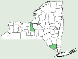 Carex ovalis NY-dist-map.png