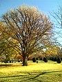 Carpet of fallen leaves - panoramio.jpg