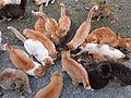 Cats in aoshima island 2.JPG