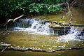 Cedar Falls Trail (20444039479).jpg