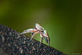 Ces petites araignées (5895952084).jpg
