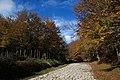 Cesarò - Strada lastricata in pietra nel bosco - panoramio.jpg