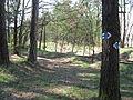 Cesta Lužná II - Hlavačov (8).jpg