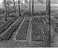 Charles A. Sprague Tree Seed Orchard Dedication (19744110452).jpg