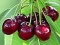 Cherry sweet cherry red fruit 167341.jpg