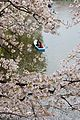Chidorigafuchi (3451077535).jpg