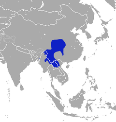 Chinese Mole Shrew area.png
