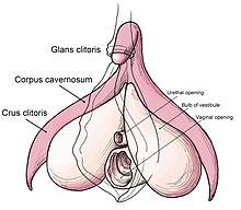 6lek hvor er klitoris
