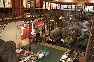 Ipswich Museum - The natural history gallery in August 2013