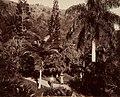 Collectie Nationaal Museum van Wereldculturen TM-60062230 Botanische tuin in Castleton Jamaica fotograaf niet bekend.jpg