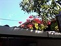 Colonia Santa Lucia, San Salvador, El Salvador - panoramio (41).jpg