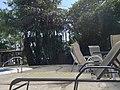 Colorado, Provincia de Limón, Cantón de Pococí, Costa Rica - panoramio (33).jpg