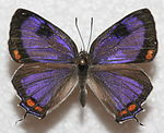 Image Result For Louisiana State Insect