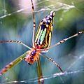 Colourful Spider.jpg