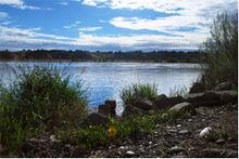 Washington State University Tri-Cities - Wikipedia