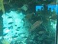 Coral World Underwater Observatory 32.jpg
