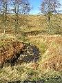 Corrie Burn, Loch Ard Forest - geograph.org.uk - 126213.jpg