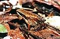 Crossodactylus01.jpg