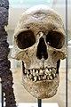 Cultural History (historisk) Museum Oslo. VIKINGR Norwegian Viking-Age Exhibition 14 Grave find Nordre Kjølen, Solør. Sword Spear Axe Arrows Skull (woman 155 cm 18-19 years old. Female warrior? Kvinnelig kriger?) Late 10th c. 4814.jpg