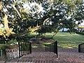 Cummer Museum Live Oak 2.jpg